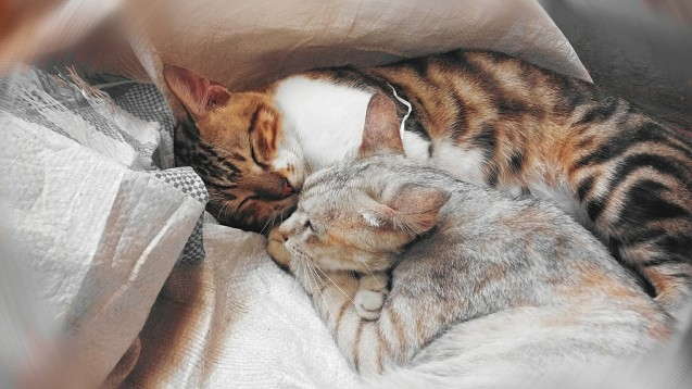 Cómo mejorar el sueño con Melatonina
