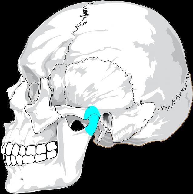 La gran importancia de la ATM (articulación temporomandibular)
